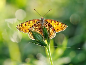 Бабочка, трава. Фон для оформления личной страницы