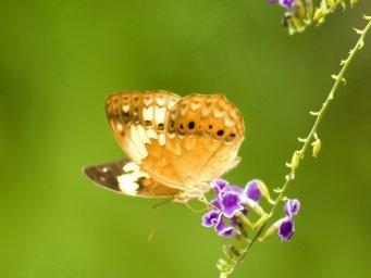 Бабочка. Фон для оформления личной страницы