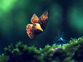 Бабочка в полете. Фон для оформления личной страницы