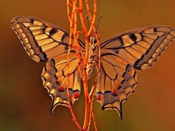 Бабочка на стебле. Фон для оформления личной страницы