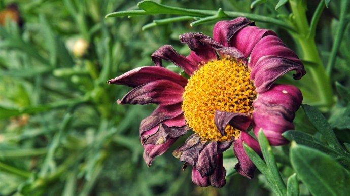 Цветок, Фон для оформления личной страницы