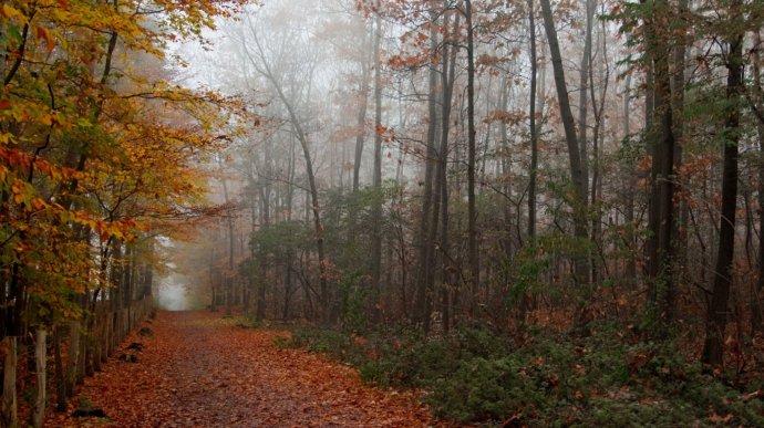 Осенний лес. Фон для оформления личной страницы