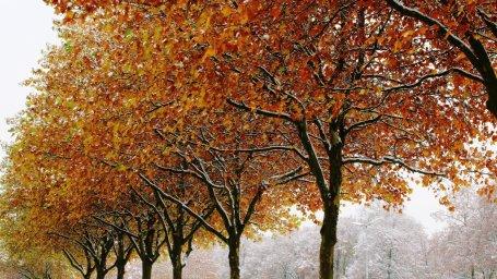 Осень, деревья. Фон для оформления личной страницы