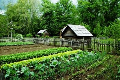 Синоптики посоветовали дачникам укрывать урожай от заморозков новые фото