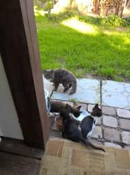 Кошки Халявщики