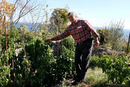 Синоптики посоветовали дачникам укрывать урожай от заморозков изоражения
