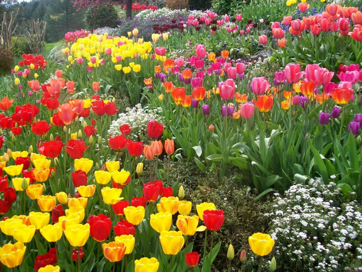 это уютный какие цветы садить весной фото и название изменить