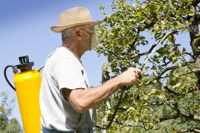 Смотреть Синоптики посоветовали дачникам укрывать урожай от заморозков видео